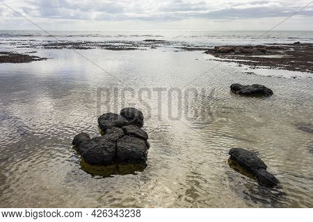 The Stromatolities Structures Resembling Black Stones In A Sea In Hamelin Pool Marine Nature Reserve