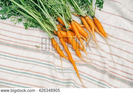 Fresh Carrots From The Garden. Small Carrots On A White Towel. Harvest Of Carrots.