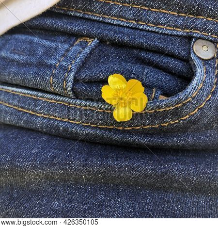Jeans Pocket Close-up, In The Pocket There Is A Yellow Buttercup Flower