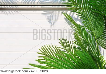 Creative Tropical Background With Palm Leaves On A White Wooden Wall. The Shadow Of The Leaves Falls