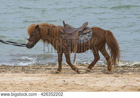 A Sad Pony Walks Along The Seashore