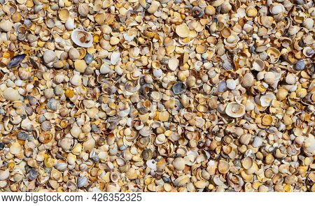 Shellstone Component Background. Shells Texture Background. Cropped.