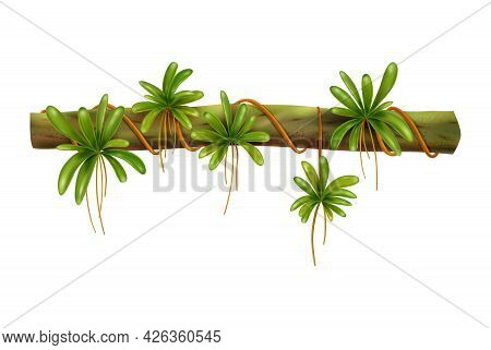 Tropical Jungle Vine With Green Leaves Realistic Vector Illustration