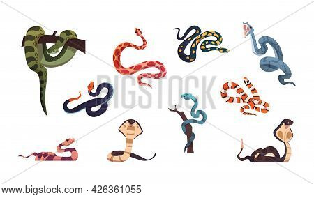 Snakes. Poison Reptiles Collection. Cartoon Wild Nature Cold-blooded Animals Set. Anaconda And Coppe