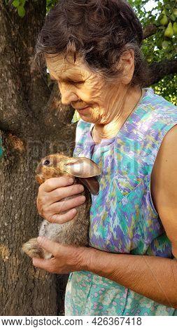 Profile Portrait Of Elderly Woman. Senior Woman Holds Little Rabbit In Her Wrinkled Hands. Smiling 8