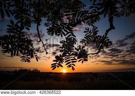 A Beautiful Sunrise Scenery With Rowan Tree Branch Silhouette Against The Sunrise Sky. Summertime Sc