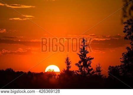 A Rising Sun Behind Spruce Trees. Tree Silhouette Against The Sunrise Skies. Summertime Scenery Of N