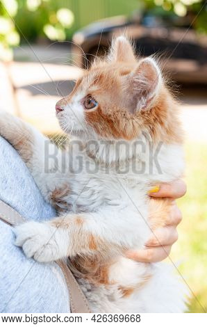 Side View Of Woman Holding  Ginger Cat Outdoor Illuminated With Sunlight In Summer