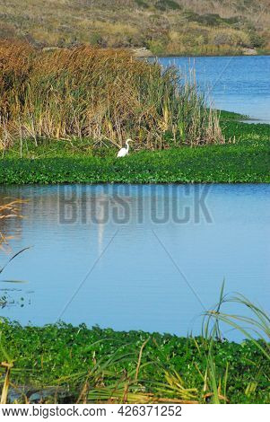 A Beautifully Colorful Vertical View Of Wetlands, Water, Cattails, Lush Foliage And A Feeding Egret