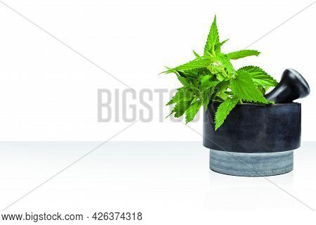Nettle In A Black Mortar Isolated On White. Copy Space.
