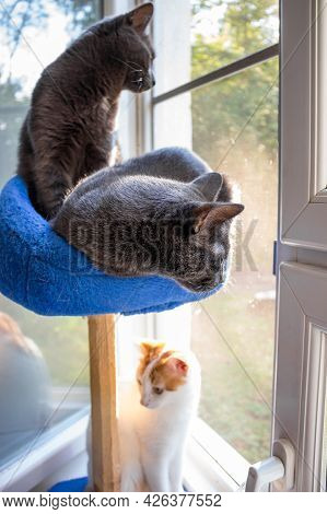 Domestic Cats Sit By The Window, Basket With A Scratching Post For Cats