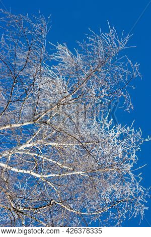 Branches Of A Birch Crown Covered With White Frost On A Frosty Winter Day. Trees On The Background O