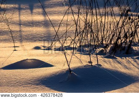 Chiaroscuro In The Snow During Sunset. The Golden Color Of A Snow-covered Field Illuminated By The S