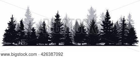 Pine Trees Silhouettes. Evergreen Coniferous Forest Silhouette, Nature Spruce Tree Park View Vector