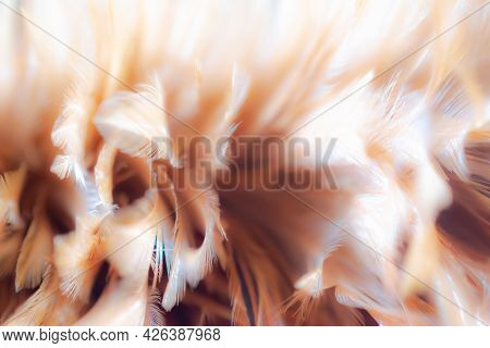Abstract Feather Fluffy Brown Nature Blur Background. Tenderness, Fragile, Gently, Gentle, Clean, Sm