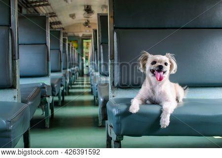 Dog So Cute Inside A Railway Train Wait For Travel