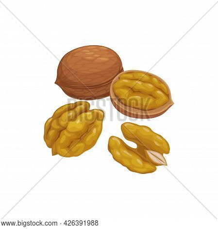 Walnut In Shell, Whole Fruit With Kernel Isolated Peeled And Husky Hardshell Wallnut. Vector Brown N