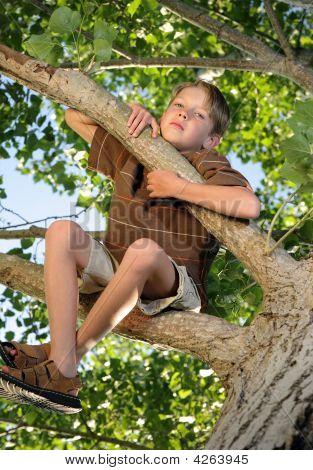 Treeissues