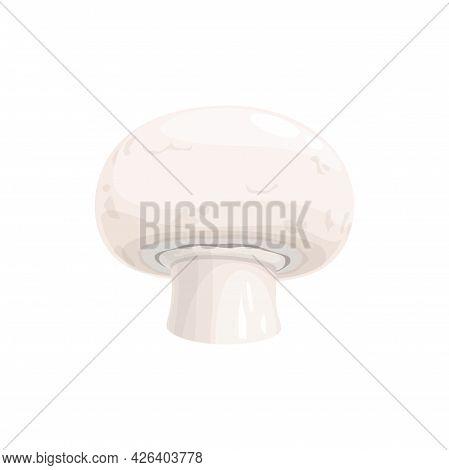 White Champignon Mushroom Isolated Realistic Fungi. Vector Cultivated Table Champignon Cremini Or Cr