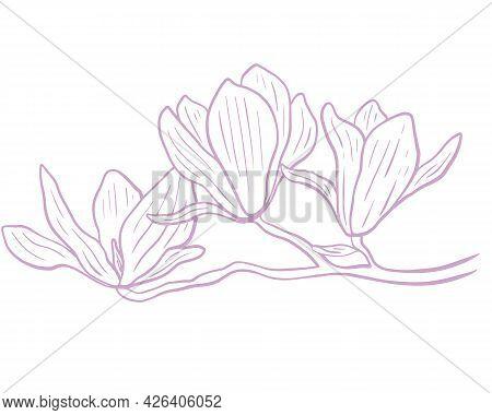Magnolia Flower Minimalistic Sketch, Vector. Blooming Of A Delicate Purple Flower. Botanical Illustr
