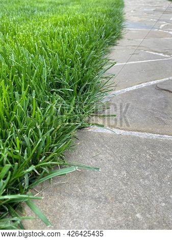 Straight Line Of New Manicured Green Turf Carpet Along A Stone Sidewalk In A City Park Or Backyard.