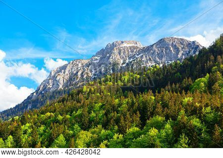 Snowy Peaks And Fir Forest . Evergreen Woodland In Alps . Pine Trees Growing On The Mountains