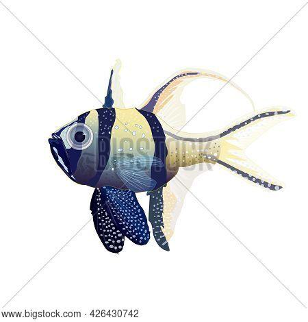 Tropical Fish Isolated On White Background. Banggai Cardinalfish, Marine Or Saltwater Aquarium Fish.