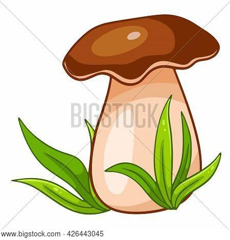 Vegetarian Food. Edible Porcini Mushroom In The Grass.