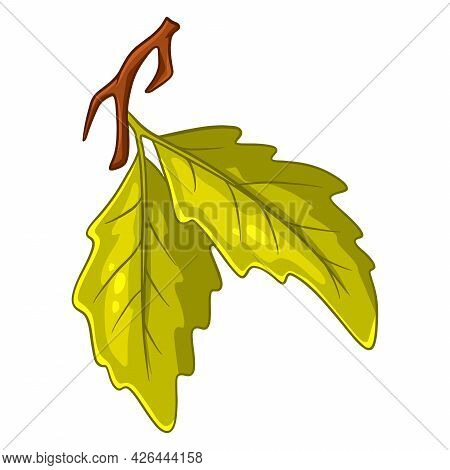 A Small Twig With Two Oak Leaves. Cartoon Style.
