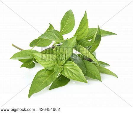 A Basil Isolated On A White Background