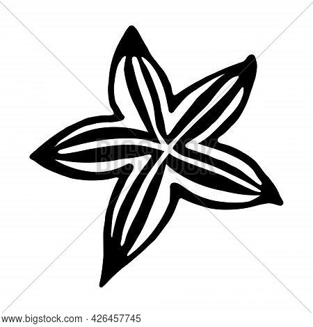 Star Anise Vector Icon. Isolated Illustration On A White Background. Hand-drawn Doodle. Black Contou