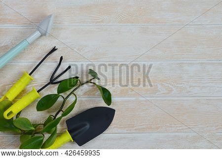 Gardening Flat Lay Top View With Garden Tools For Care Plants And Home Garden Concept, Green Leaf Of