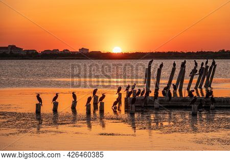 Beautiful Red And Orange Sunset Over The Sea. The Sun Goes Down Over The Sea. A Flock Of Cormorants