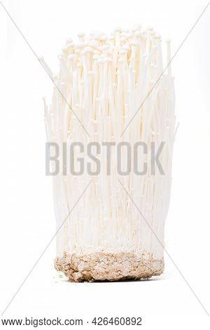 Isolated Golden Needle Mushroom. Enoki Mushroom, Golden Needle Mushroom Standind On White Background