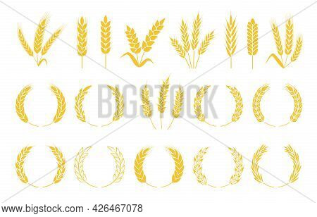 Wheat Wreaths. Rice Or Wheat Ears, Barley Spikes, Rye Grains And Crops. Organic Cereal Plants Ear Si