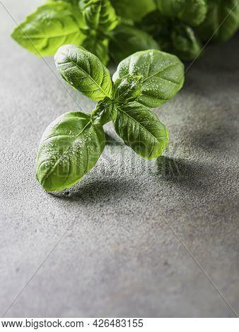 Fresh Organic Basil On A Concrete Background.