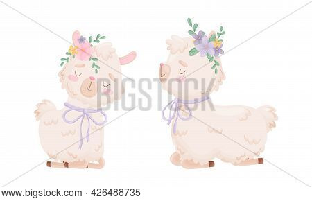 Cute Llama Or Alpaca Sitting With Floral Adornment On Its Head Vector Set