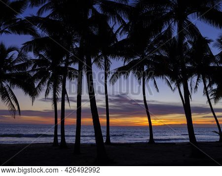 Beautiful Sunset Over The Sea With Silhouette Coconut Plam Tree. Patong Tropical Beach Phuket Thaila