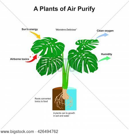 A Plants Of Air Purify. Illustration Showing Amazing Of Plants It Can A Roots Converted Toxics To Fo