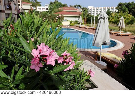 View Through The Oleander Flowers On The Swimming Pool And Sun Beds. Vacation On Summer Resort
