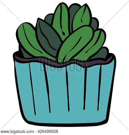 Echeveria Green Succulent Vector Clip Art Illustration