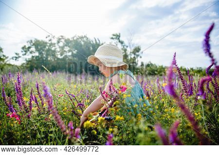 A Little Girl In A Panama Hat And A Blue Dress In A Summer Blooming Field Gathers Sage In A Basket W