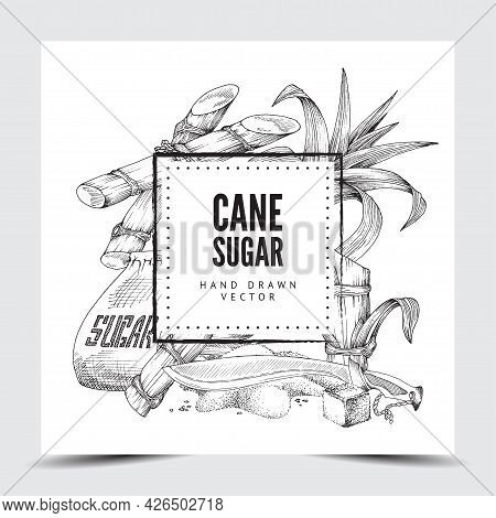 Cane Sugar Background With Frame For Text Engraved Vector Illustration Isolated.