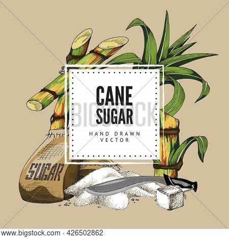 Cane Sugar Banner With Sugarcane Plant, Engraving Vintage Vector Illustration.