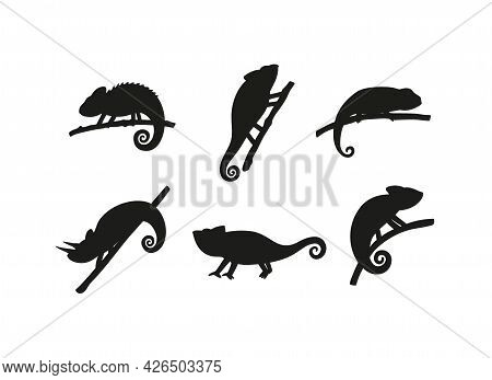 Set Of Black Silhouettes Chameleons Lizard Reptiles Sitting On Branches.