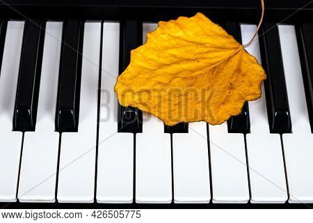 Autumnal Leaf On The Piano Keyboard Closeup