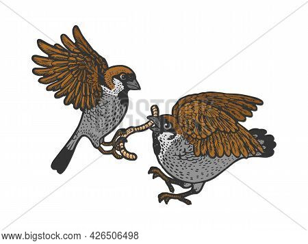 Birds Fight For The Worm Color Line Art Sketch Engraving Vector Illustration. T-shirt Apparel Print