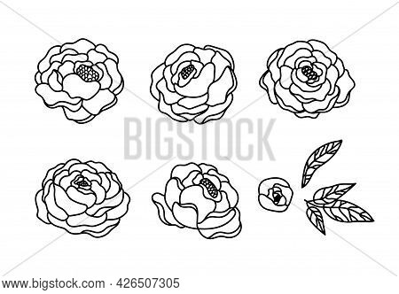 Peony Flowers Isolated Clipart, Black And White Floral Decorative Elements, Line Blossom Peonies And
