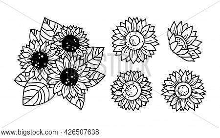 Sunflowers Isolated Clipart, Black And White Floral Decorative Elements, Line Wildflower And Leaves,