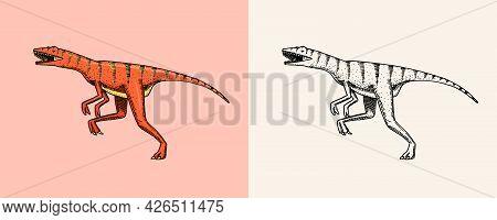 Dinosaur Velociraptor, Skeletons, Fossils. Prehistoric Reptiles. Vintage Sketch For T-shirt Print Or